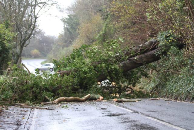 fallen-tree-cowleaze