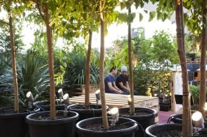 Coffee Farm14